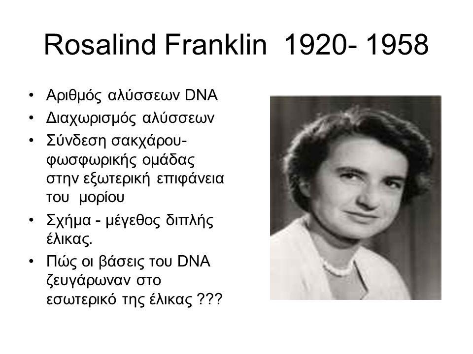 Rosalind Franklin 1920- 1958 Αριθμός αλύσσεων DNA Διαχωρισμός αλύσσεων