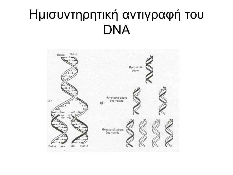 Ημισυντηρητική αντιγραφή του DNA