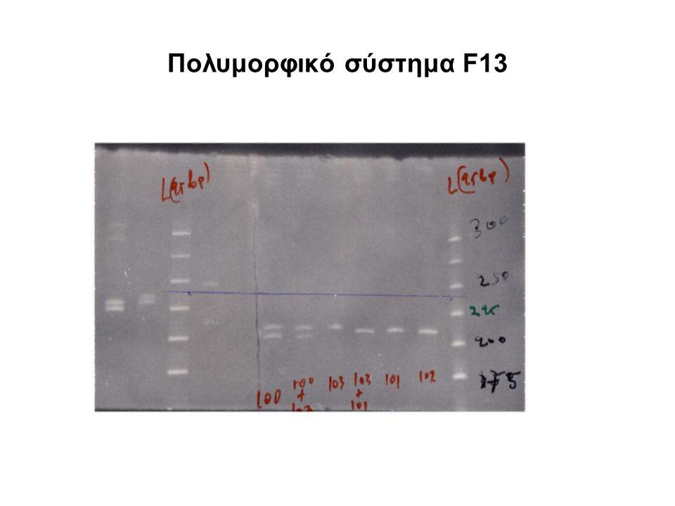 Πολυμορφικό σύστημα F13