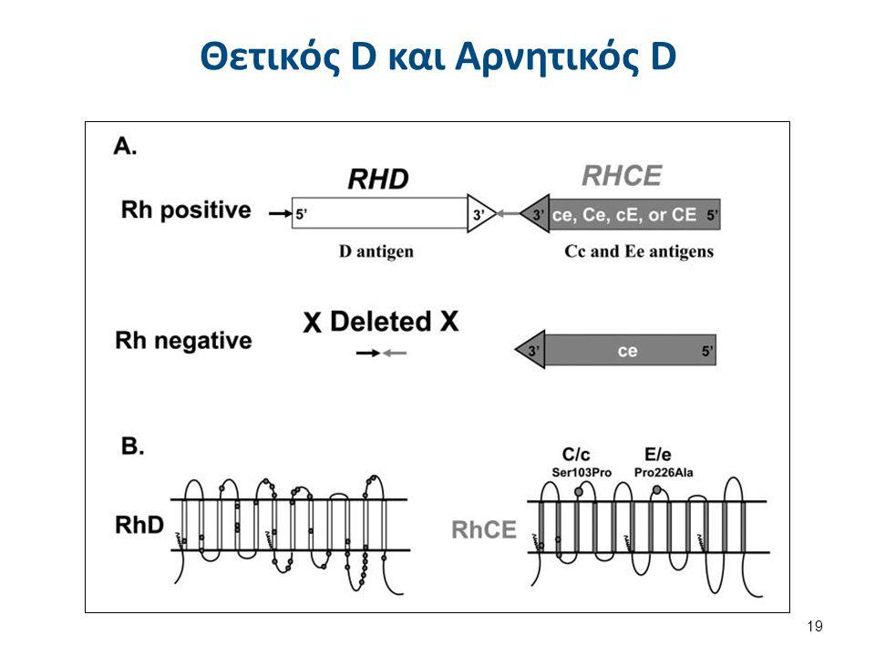 Μοντέλο Τοπολογίας RhAG, RhCE και RhD γονιδίων