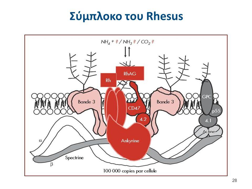 Φαινότυπος Rhnull