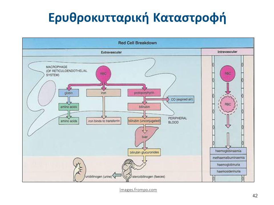 Εξωαγγειακή Ερυθροκυτταρική Καταστροφή