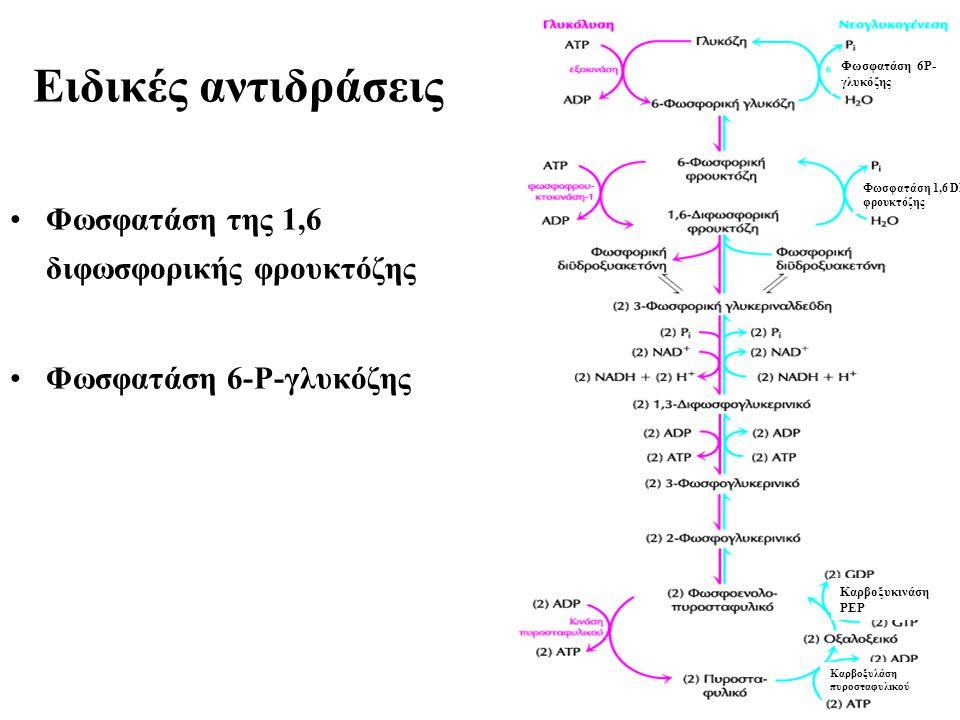 Eιδικές αντιδράσεις Φωσφατάση της 1,6 διφωσφορικής φρουκτόζης