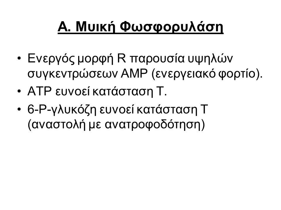 Α. Μυική Φωσφορυλάση Ενεργός μορφή R παρουσία υψηλών συγκεντρώσεων ΑΜΡ (ενεργειακό φορτίο). ΑΤP ευνοεί κατάσταση Τ.