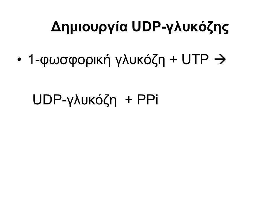 Δημιουργία UDP-γλυκόζης