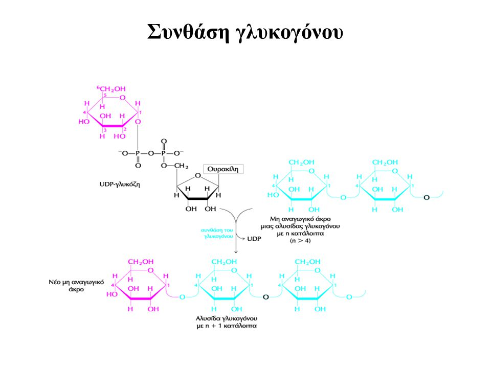 Συνθάση γλυκογόνου