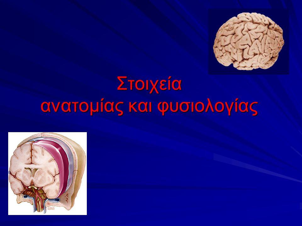 Στοιχεία ανατομίας και φυσιολογίας