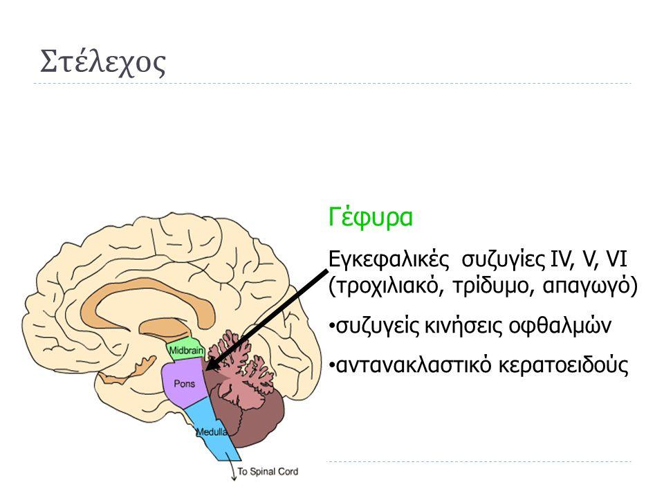 Στέλεχος Γέφυρα. Εγκεφαλικές συζυγίες IV, V, VI (τροχιλιακό, τρίδυμο, απαγωγό) συζυγείς κινήσεις οφθαλμών.