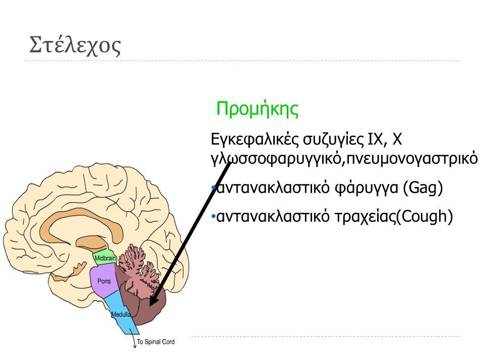 Στέλεχος Προμήκης. Εγκεφαλικές συζυγίες IX, X γλωσσοφαρυγγικό,πνευμονογαστρικό. αντανακλαστικό φάρυγγα (Gag)