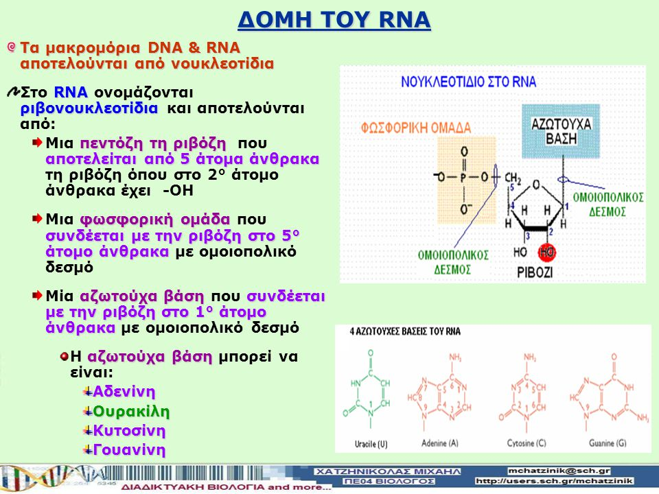 ΔΟΜΗ ΤΟΥ RNA Τα μακρομόρια DNA & RNA αποτελούνται από νουκλεοτίδια