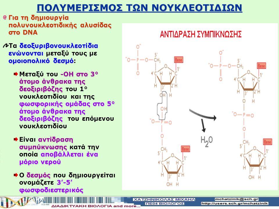 ΠΟΛΥΜΕΡΙΣΜΟΣ ΤΩΝ ΝΟΥΚΛΕΟΤΙΔΙΩΝ