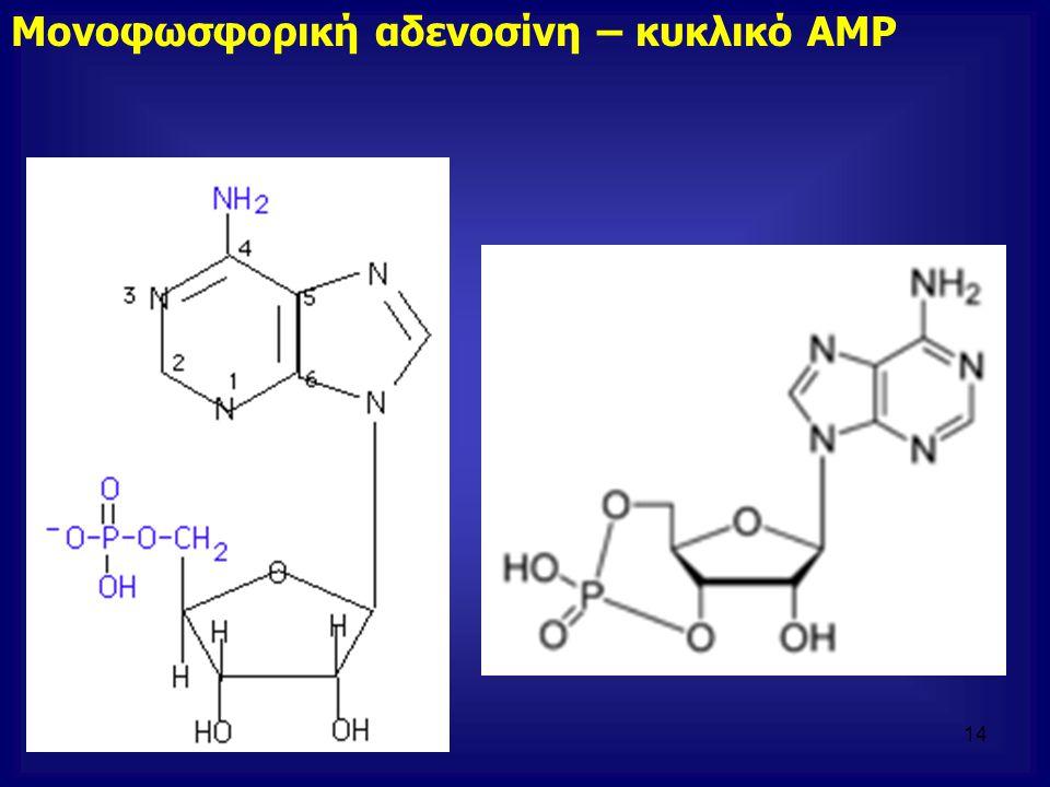 Μονοφωσφορική αδενοσίνη – κυκλικό ΑΜΡ