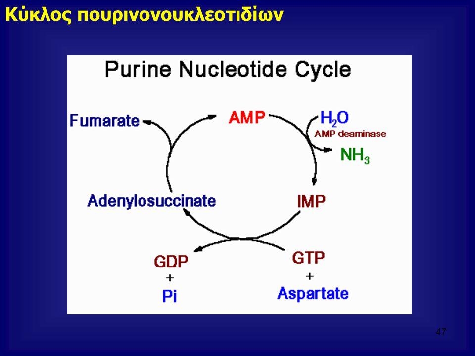 Κύκλος πουρινονουκλεοτιδίων