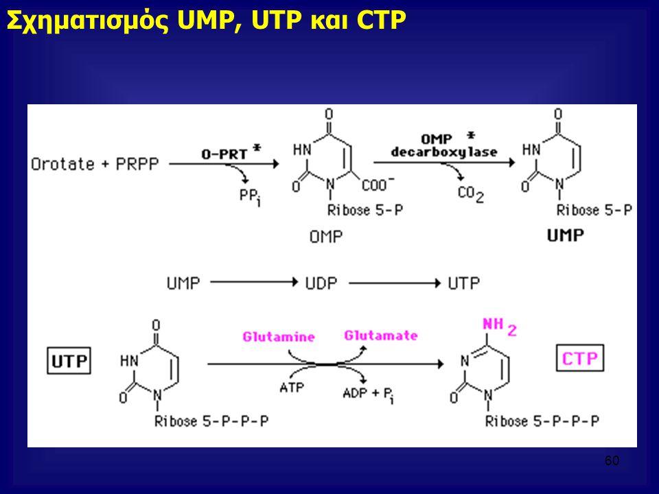 Σχηματισμός UMP, UTP και CTP