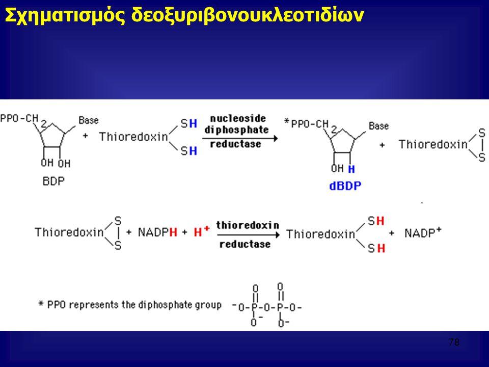 Σχηματισμός δεοξυριβονουκλεοτιδίων