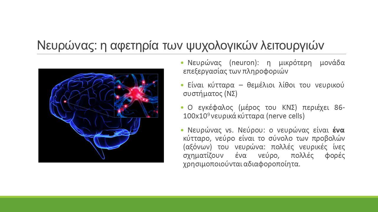 Νευρώνας: η αφετηρία των ψυχολογικών λειτουργιών