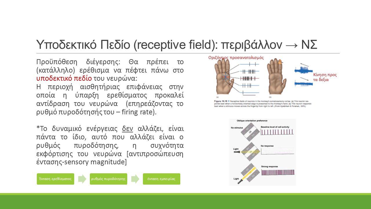 Υποδεκτικό Πεδίο (receptive field): περιβάλλον → ΝΣ