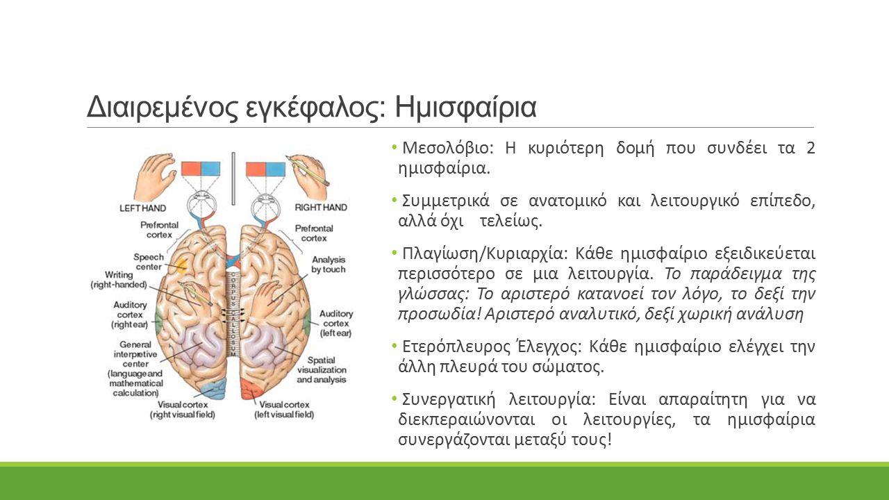 Διαιρεμένος εγκέφαλος: Ημισφαίρια