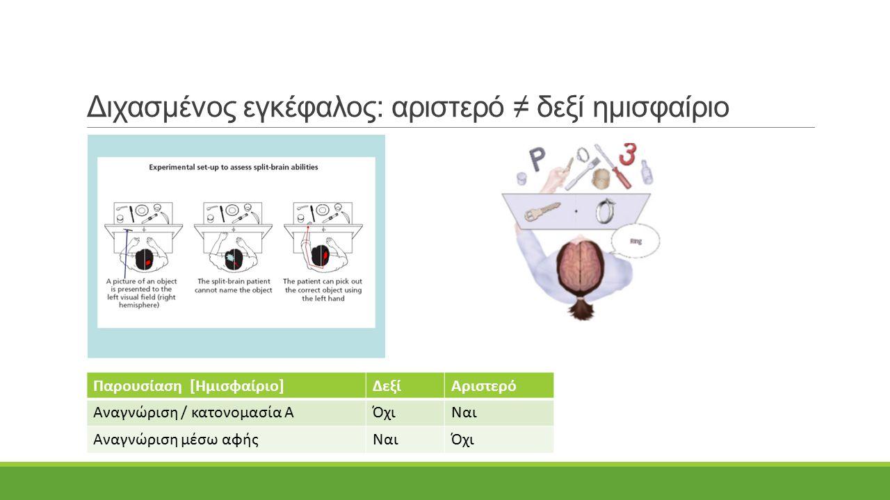 Διχασμένος εγκέφαλος: αριστερό ≠ δεξί ημισφαίριο