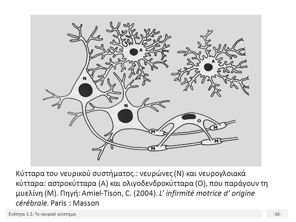 Κύτταρα του νευρικού συστήματος