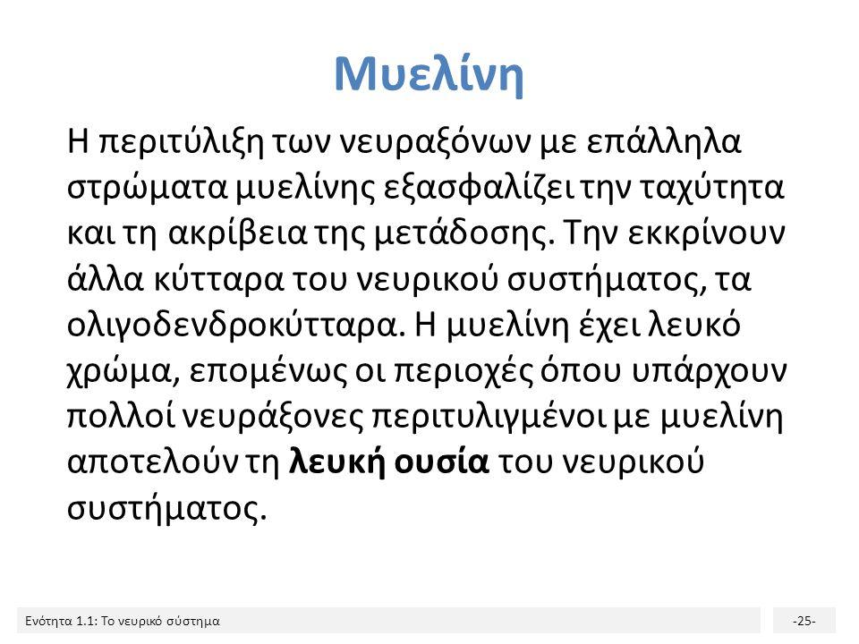 Μυελίνη