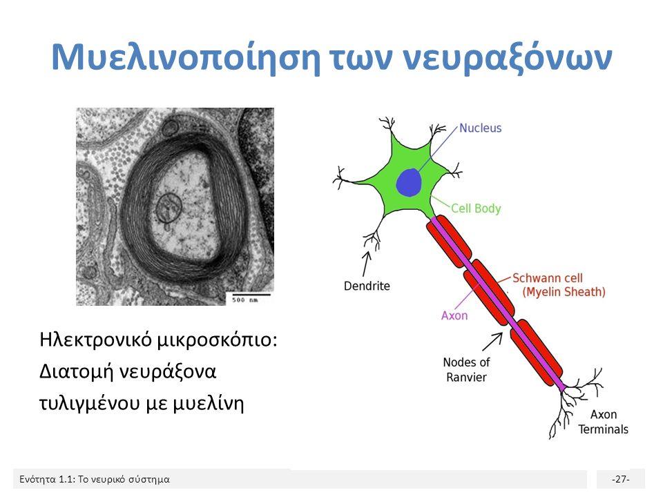 Μυελινοποίηση των νευραξόνων
