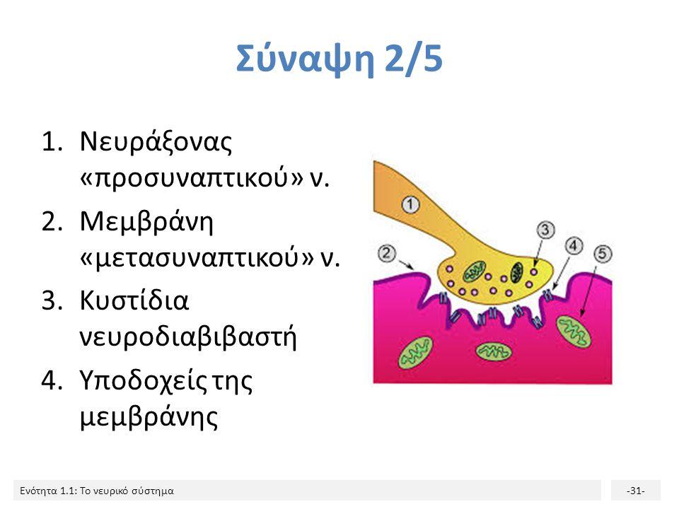 Σύναψη 2/5 Νευράξονας «προσυναπτικού» ν. Μεμβράνη «μετασυναπτικού» ν.