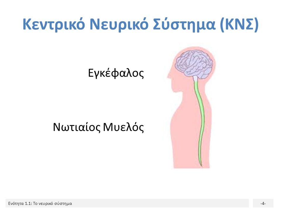 Κεντρικό Νευρικό Σύστημα (ΚΝΣ)