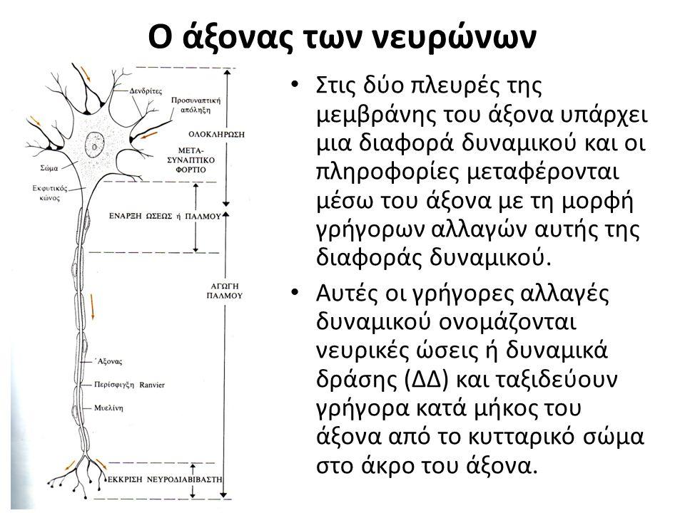 Ο άξονας των νευρώνων