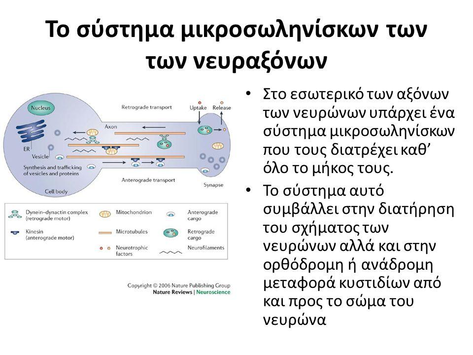 Το σύστημα μικροσωληνίσκων των των νευραξόνων