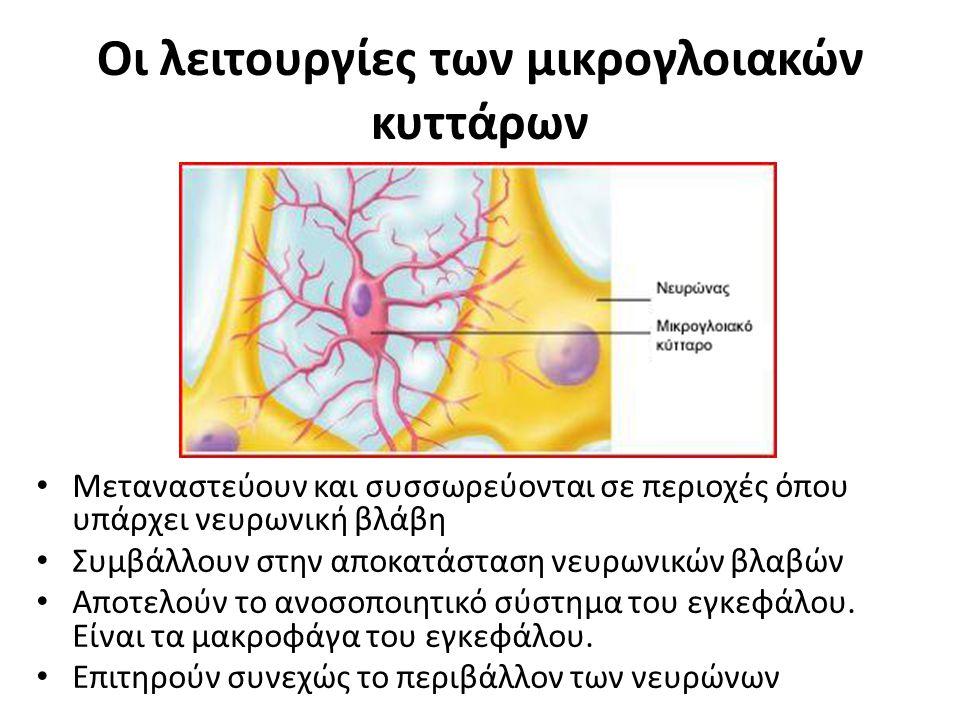 Οι λειτουργίες των μικρογλοιακών κυττάρων