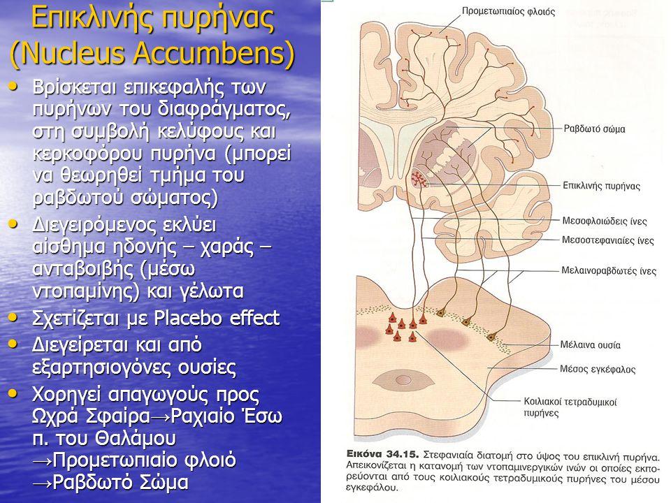 Επικλινής πυρήνας (Nucleus Accumbens)