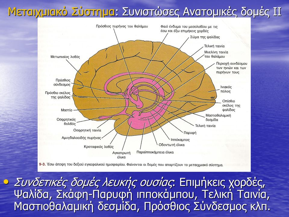 Μεταιχμιακό Σύστημα: Συνιστώσες Ανατομικές δομές ΙΙ