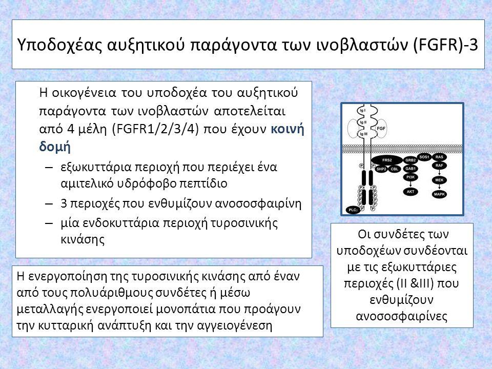 Υποδοχέας αυξητικού παράγοντα των ινοβλαστών (FGFR)-3