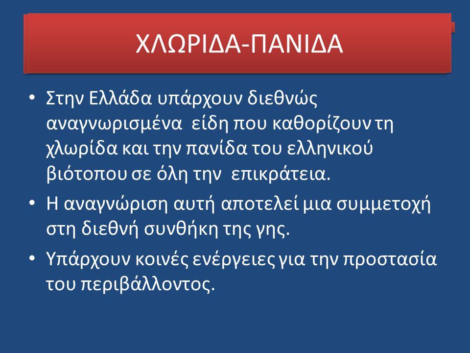 ΧΛΩΡΙΔΑ-ΠΑΝΙΔΑ ΧΛΩΡΙΔΑ-ΠΑΝΙΔΑ