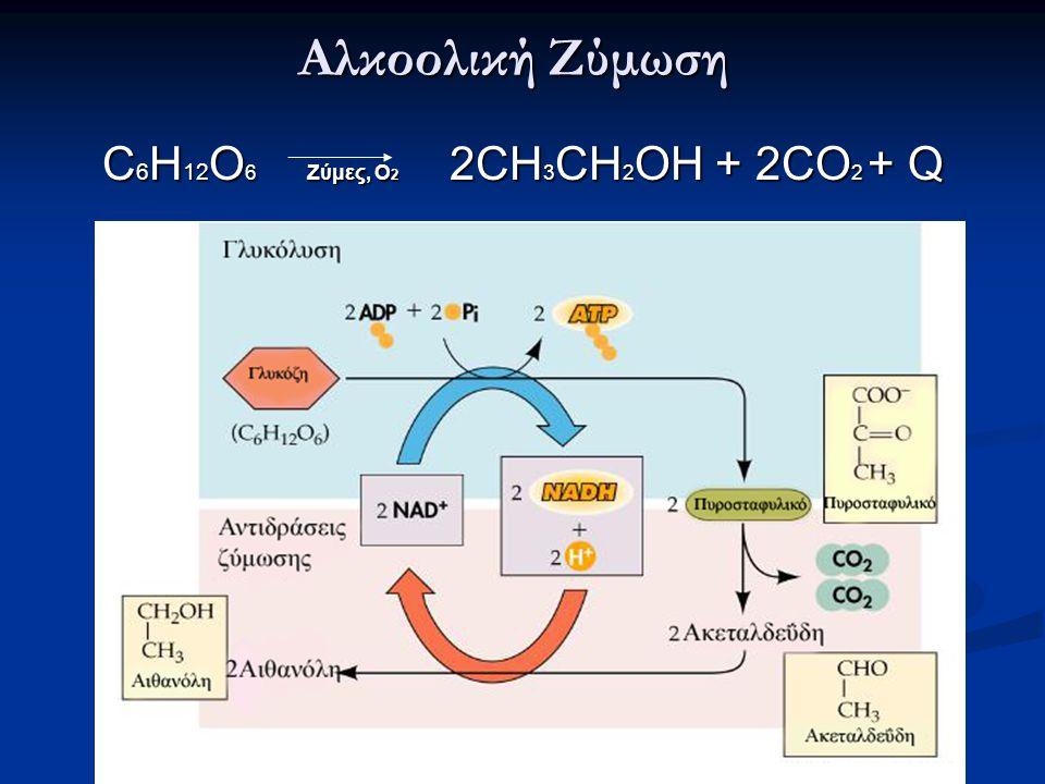 Αλκοολική Ζύμωση C6Η12O6 Ζύμες, Ο2 2CH3CΗ2OH + 2CO2 + Q
