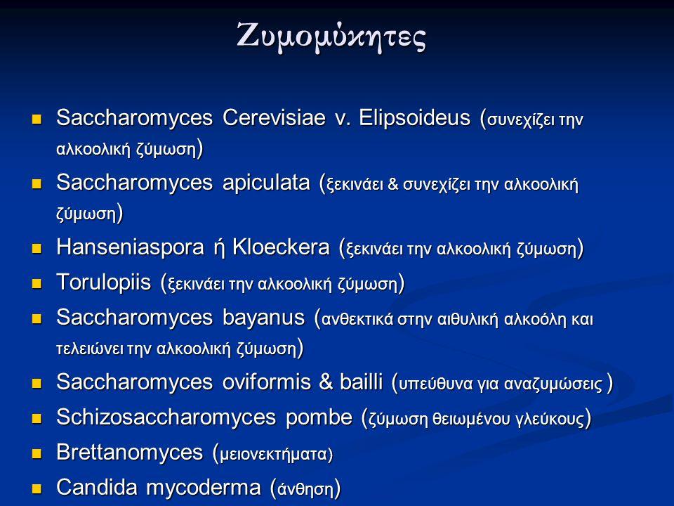 Ζυμομύκητες Saccharomyces Cerevisiae v. Elipsoideus (συνεχίζει την αλκοολική ζύμωση)