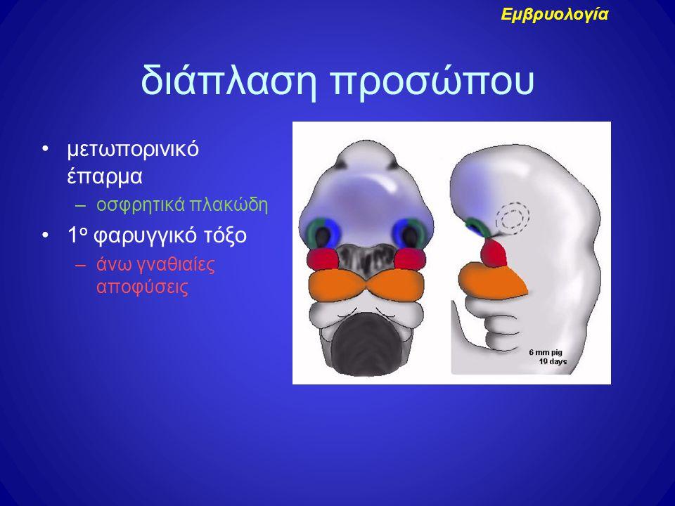 διάπλαση προσώπου μετωπορινικό έπαρμα 1ο φαρυγγικό τόξο