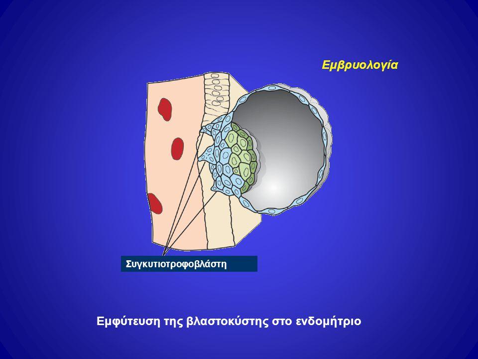 Εμφύτευση της βλαστοκύστης στο ενδομήτριο