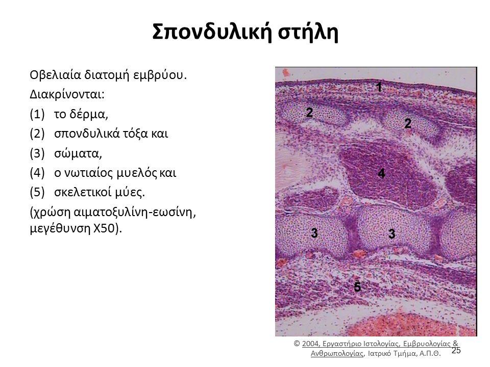 Δέρμα - Μύες - Υποδόριο Λίπος