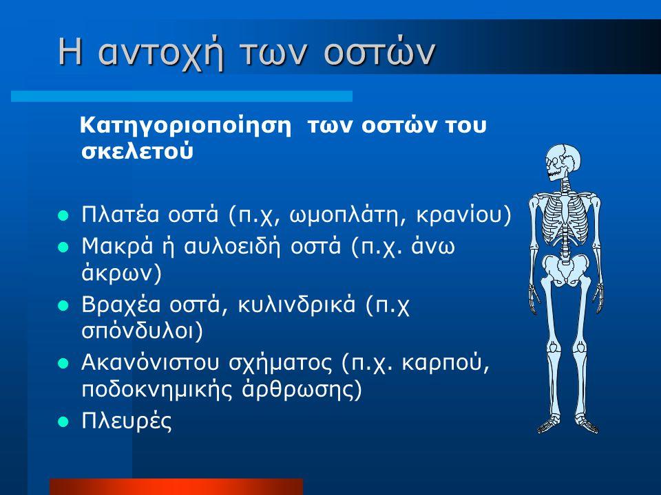 Η αντοχή των οστών Κατηγοριοποίηση των οστών του σκελετού