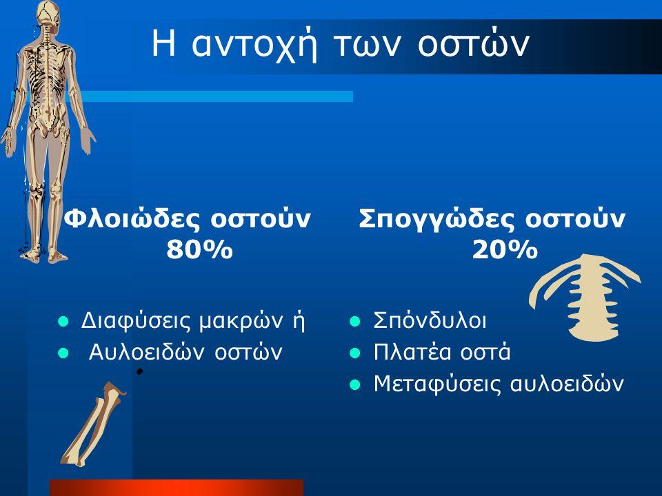 Η αντοχή των οστών Φλοιώδες οστούν 80% Σπογγώδες οστούν 20%