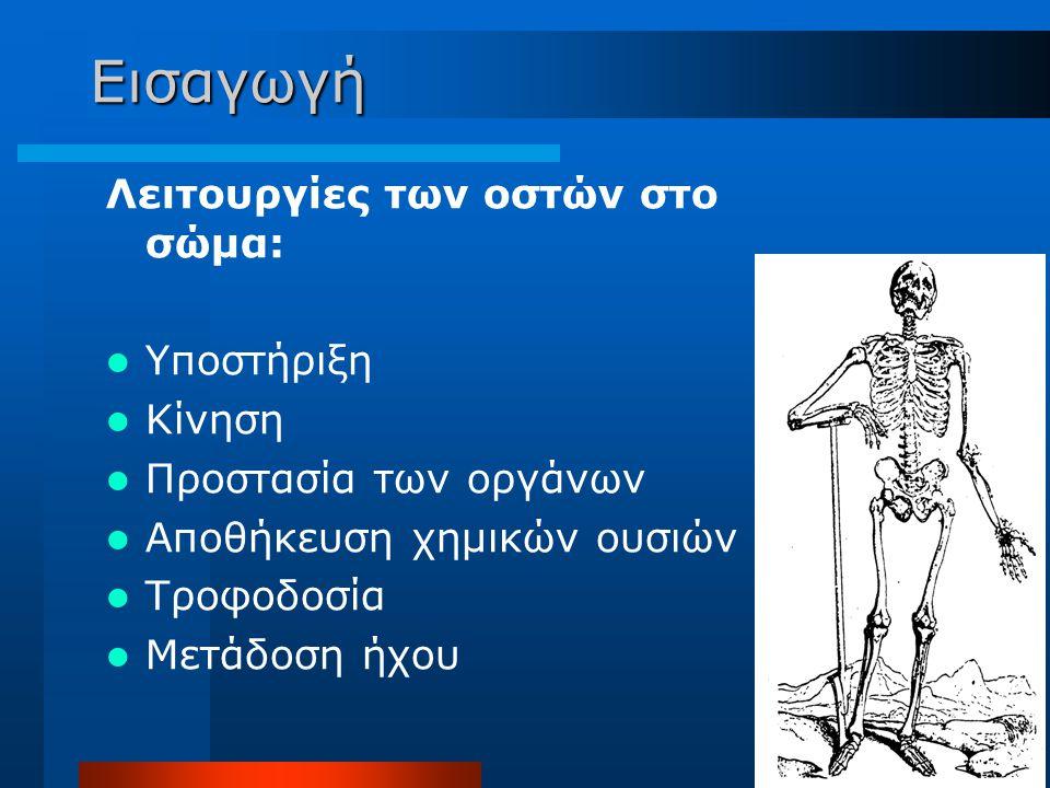 Εισαγωγή Λειτουργίες των οστών στο σώμα: Υποστήριξη Κίνηση