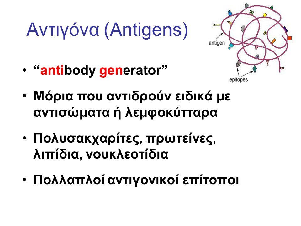 Αντιγόνα (Antigens) antibody generator