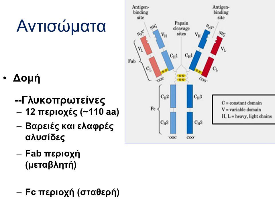 Αντισώματα Δομή --Γλυκοπρωτείνες 12 περιοχές (~110 aa)