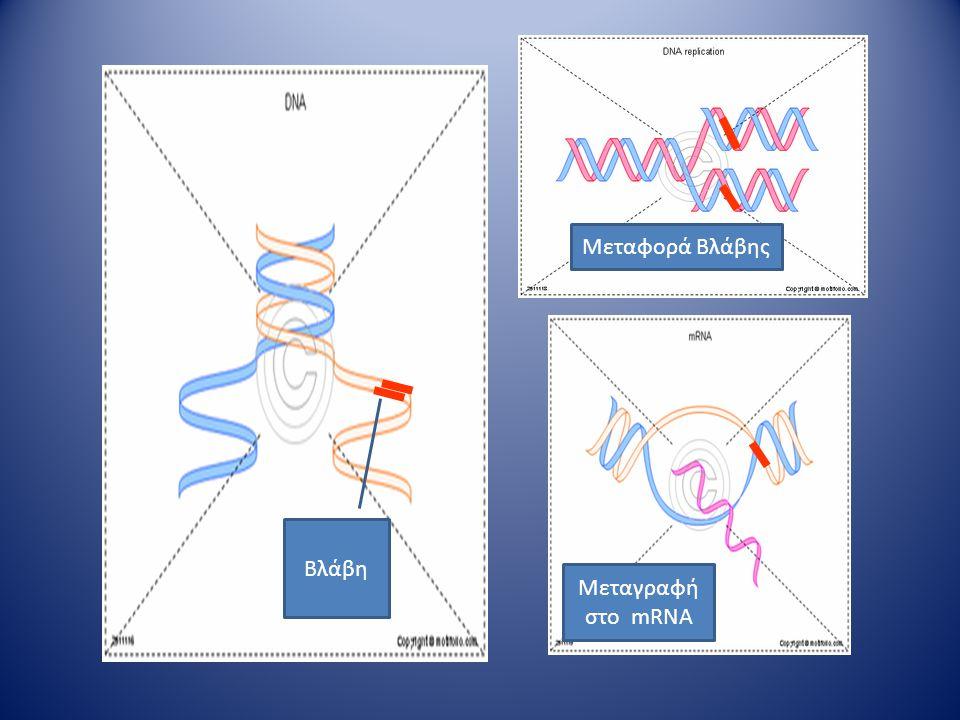 Μεταφορά Βλάβης Bλάβη Μεταγραφή στο mRNA