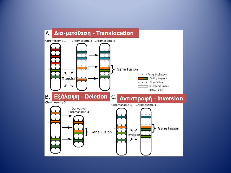 Δια-μετάθεση - Translocation