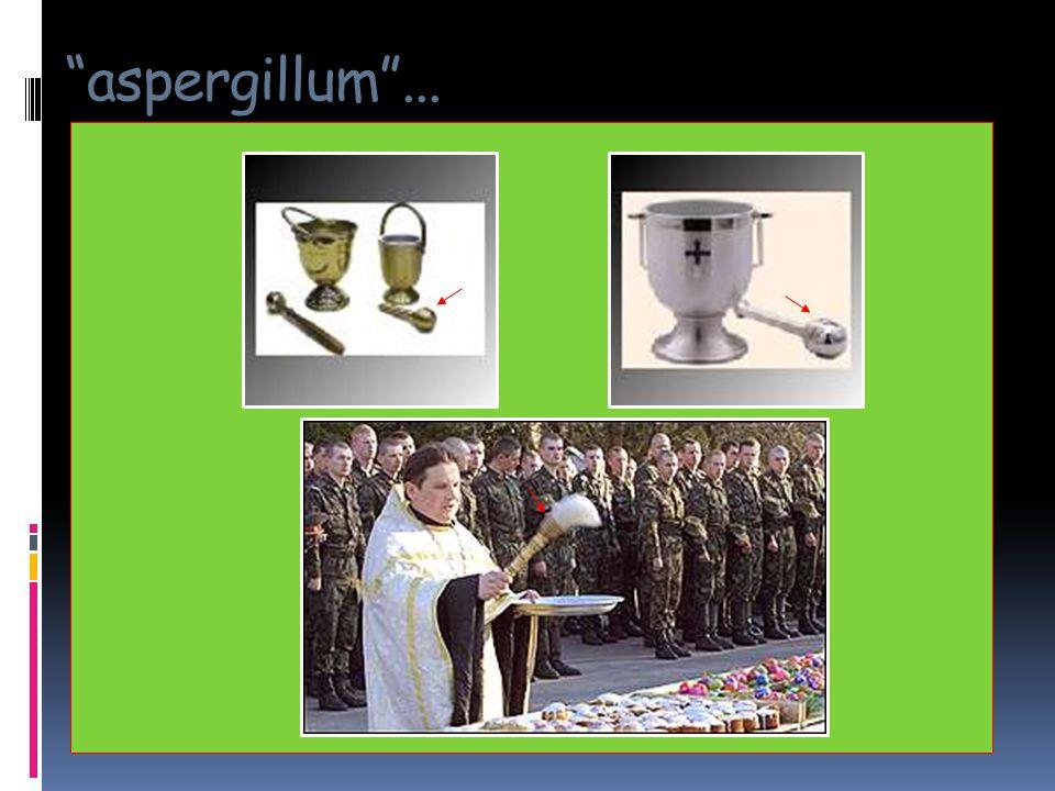 aspergillum ...