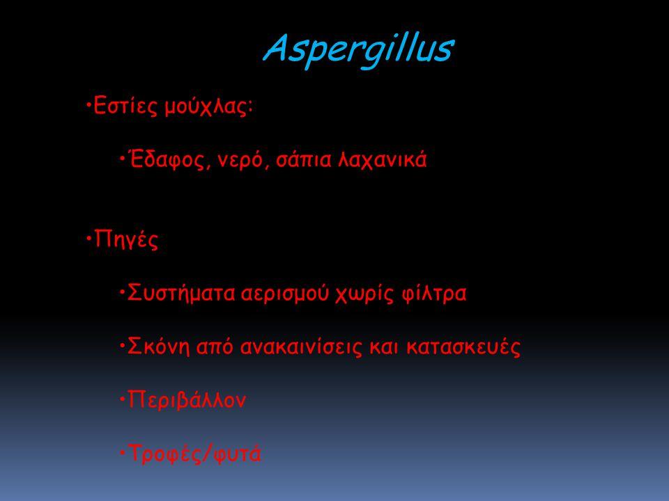Aspergillus Εστίες μούχλας: Έδαφος, νερό, σάπια λαχανικά Πηγές
