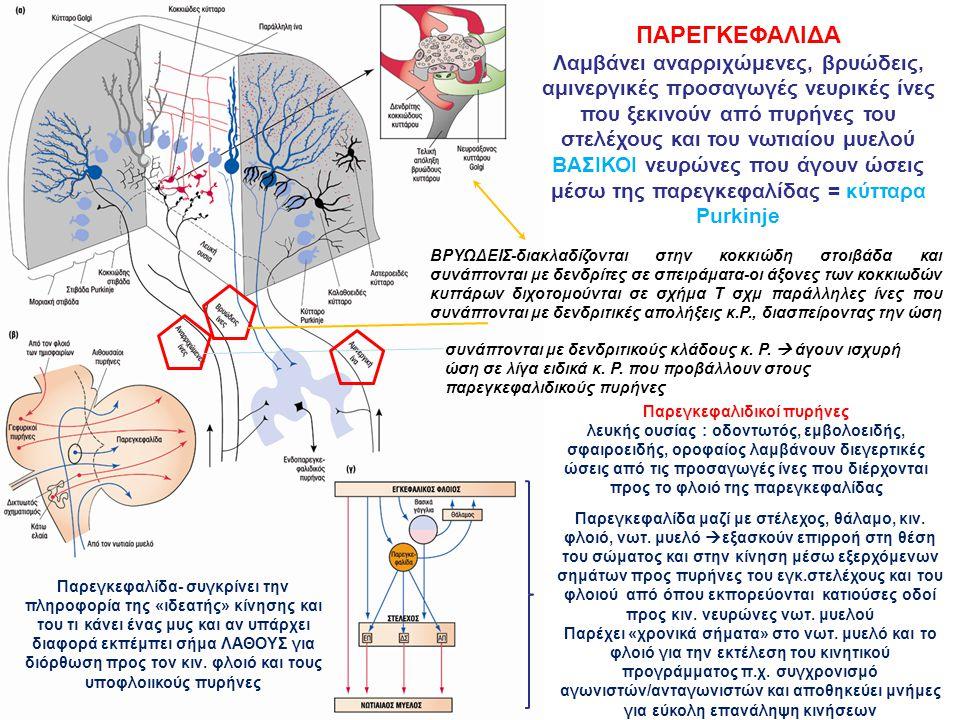 Παρεγκεφαλιδικοί πυρήνες